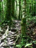 Yendo de excursión a través de la selva, Panamá foto de archivo libre de regalías