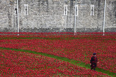 Yeomen Warder Amongst Poppies à la tour de Londres Images libres de droits