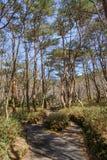 Yeongsil slinga av den Hallasan nationalparken Arkivfoton