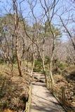 Yeongsil slinga av den Hallasan nationalparken Arkivfoto