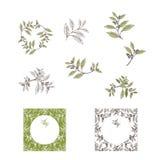 Yerba Mate Tea Leaf and Plant Design Set Stock Photos