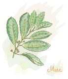 Yerba Mate. Watercolor style. Royalty Free Stock Image