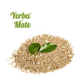 Yerba Mate on white background Stock Image