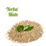 Yerba Mate on white background Stock Image