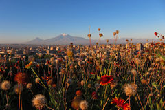 Yerevan with Ararat. Yerevan - the capital city of Armenia in the early morning with the legendary Mt. Ararat in the background (5137 m) and flowers in the Royalty Free Stock Photography