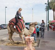 The camel driver helps the visitor to descend from the camel in Yeriho in Israel. Yeriho, Israel, November 25, 2017 : The camel driver helps the visitor to Royalty Free Stock Images