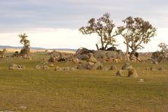 Yermo australiano Foto de archivo