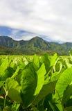 Yermo de Hawaii Imagen de archivo libre de regalías