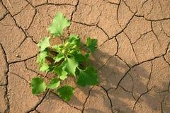 Yermo. Hierba verde en desierto. Fotografía de archivo