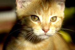 Yes. Kitty looking at you Royalty Free Stock Photography