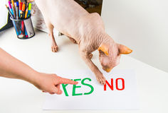 Yes and No concept Royalty Free Stock Image