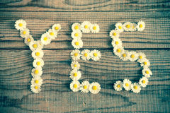 Yes wrote with daisies. On wooden background Royalty Free Stock Photos