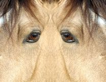 The Yeti : am I a monster ?. Symmetry with an horse close up Stock Photo