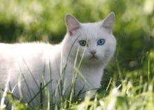 Yeux bleus et verts Photographie stock