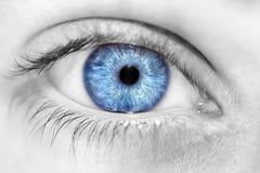 Yeux bleus perspicaces de regard Photographie stock libre de droits