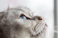 Yeux bleus somnolents Image stock
