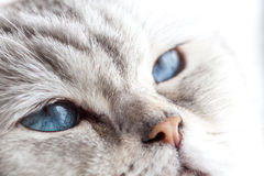 Yeux bleus somnolents Photos stock