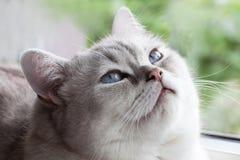 Yeux bleus somnolents Photo stock