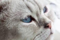 Yeux bleus somnolents Photo libre de droits