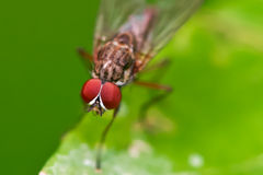 Yeux d'insecte Photo stock