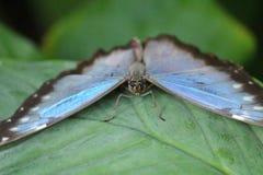 Yeux d'insecte Photo libre de droits