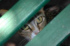 Yeux d'un chat Image libre de droits