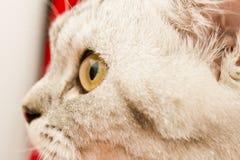 Yeux d'un chat Photos libres de droits