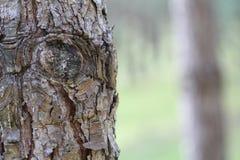 Yeux d'un tronc d'arbre Image libre de droits