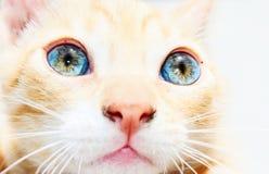Yeux de chatons Image libre de droits