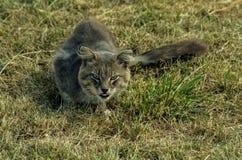 Yeux de la faune Photo libre de droits