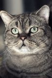 Yeux du chat…. photo stock