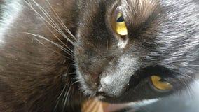 Yeux du ` s de chat noir photographie stock libre de droits