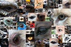 Yeux humains et animaux Photo stock