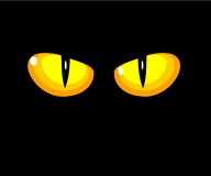 Yeux jaunes de chat Photo stock