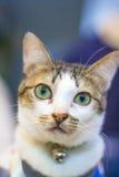 Yeux mignons de jaune de chat Image stock