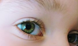 Yeux verts Image stock