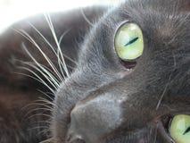 yeux verts de chat noir d'à¸'the Images libres de droits