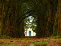 Yew alley. A yew alley to a church in Murthly stock image