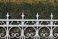 Yew as a hedge in the garden Stock Photos