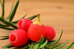 Yew berries close up Stock Photo