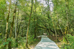 The yew-and boxwood grove in the mountains of Sochi, Russia Stock Images