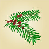 Yew branches with red berries vector Stock Photography