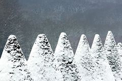 Yew cones covered with snow Stock Image
