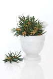 Yew Leaf Sprigs Stock Photos