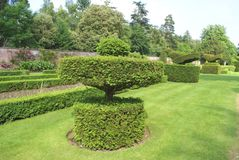 Yew topiary garden, Cliveden, Buckinghamshire, UK Royalty Free Stock Image