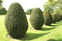 Yew topiary. topiary trees. garden Royalty Free Stock Photography