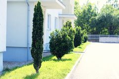 Yew-tree alley. Near apartment bouilding stock photo