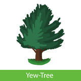 Yew-Tree cartoon icon Stock Image
