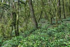 Yew-tree grove Royalty Free Stock Photos