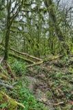 Yew-tree grove Stock Photography
